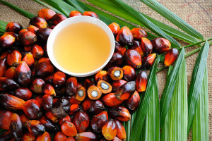 Close up of fresh oil palm fruits with cooking oil, selective focus.